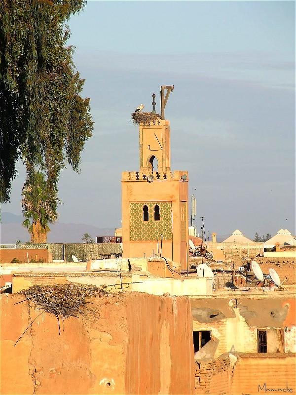 Marrakech et les cigognes