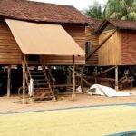 Tonle Sap - Rice drying