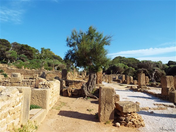 Tipaza - Roman ruins 3