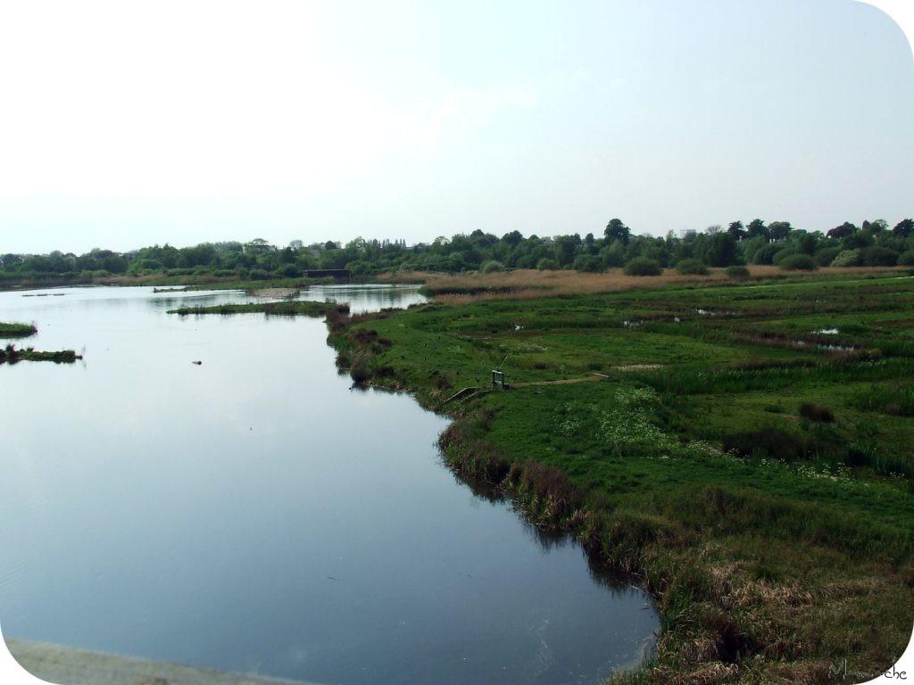 Wetlands - Marais 2