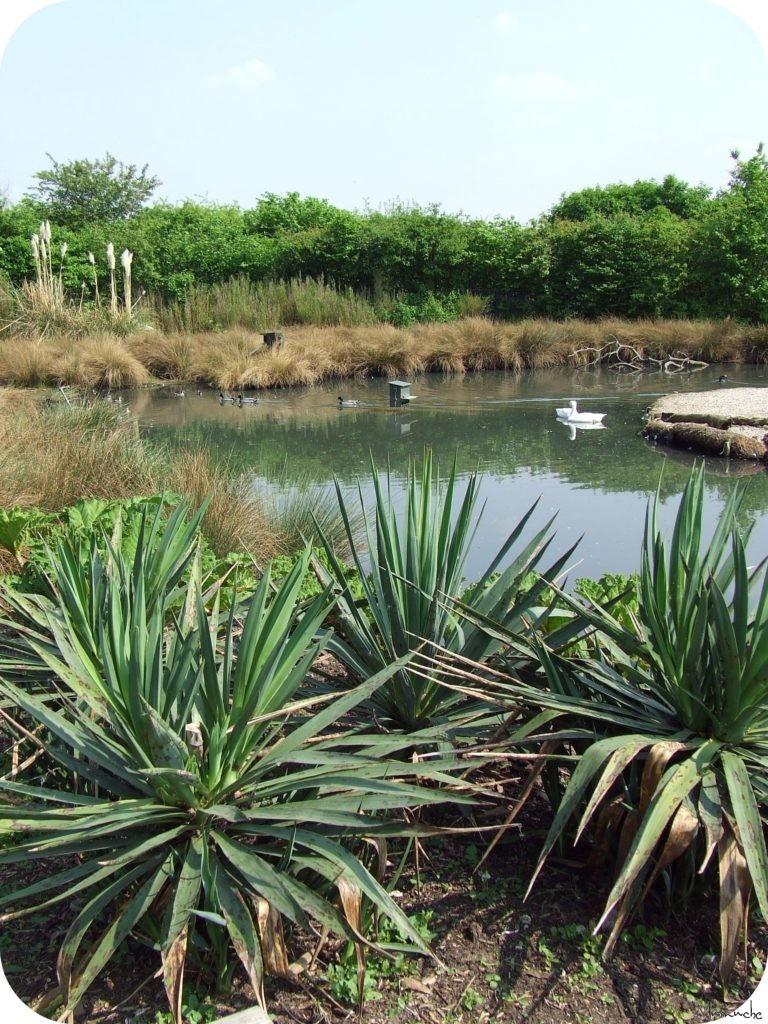 Wetlands - Marais(1)